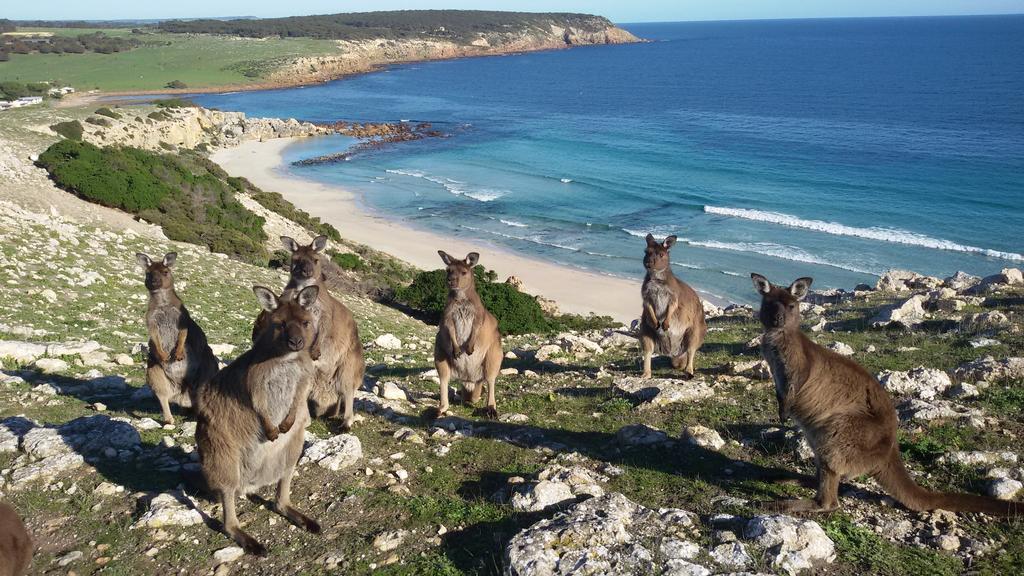 Ep. 323 - Kangaroo Island