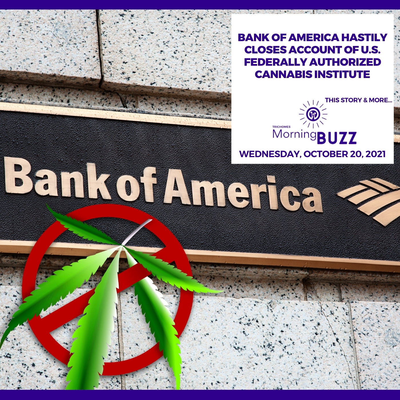 Bank Of America Hastily Closes Account Of U.S. Federally Authorized Cannabis Institute show art