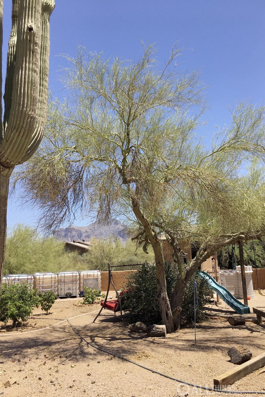 saguaro std