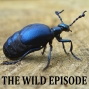 Artwork for Violet Oil Beetle : The Hitchhiker From Hell