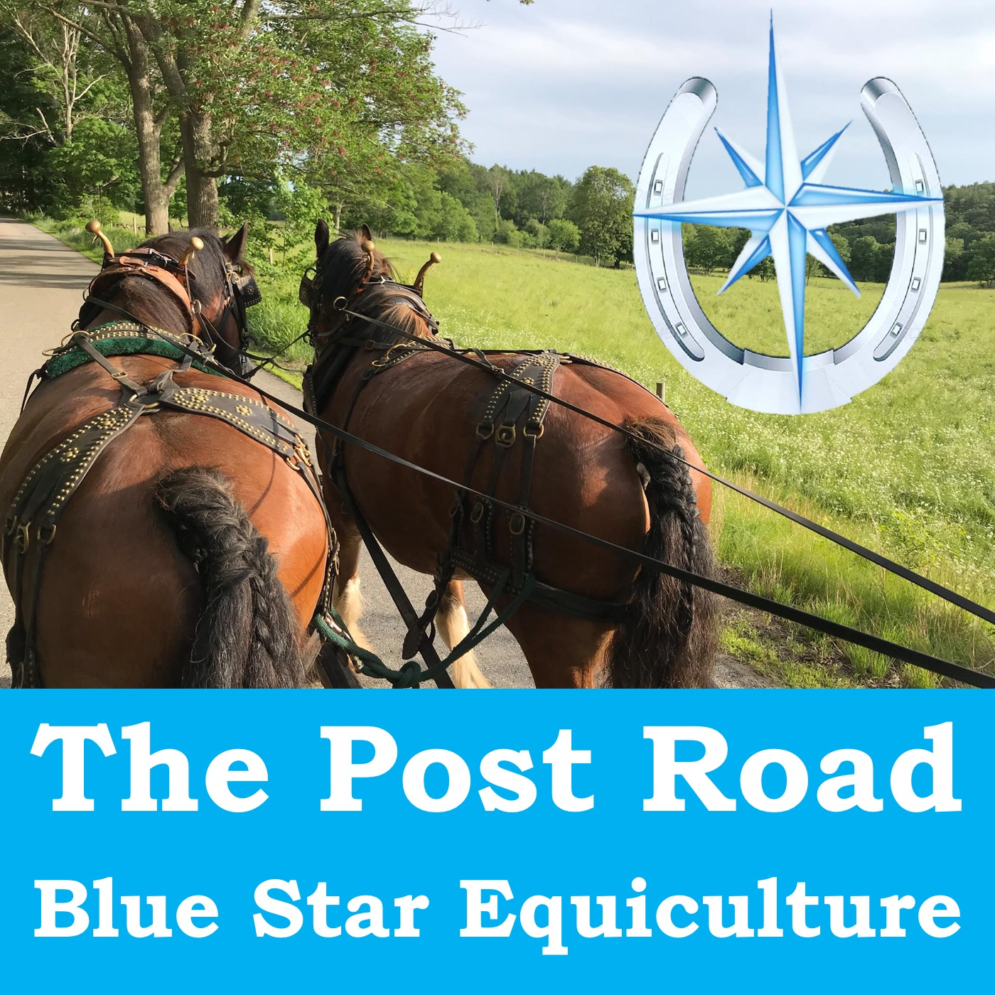 The Post Road with Blue Star Equiculture show art