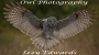 Artwork for Owl Photography with Izzy Edwards