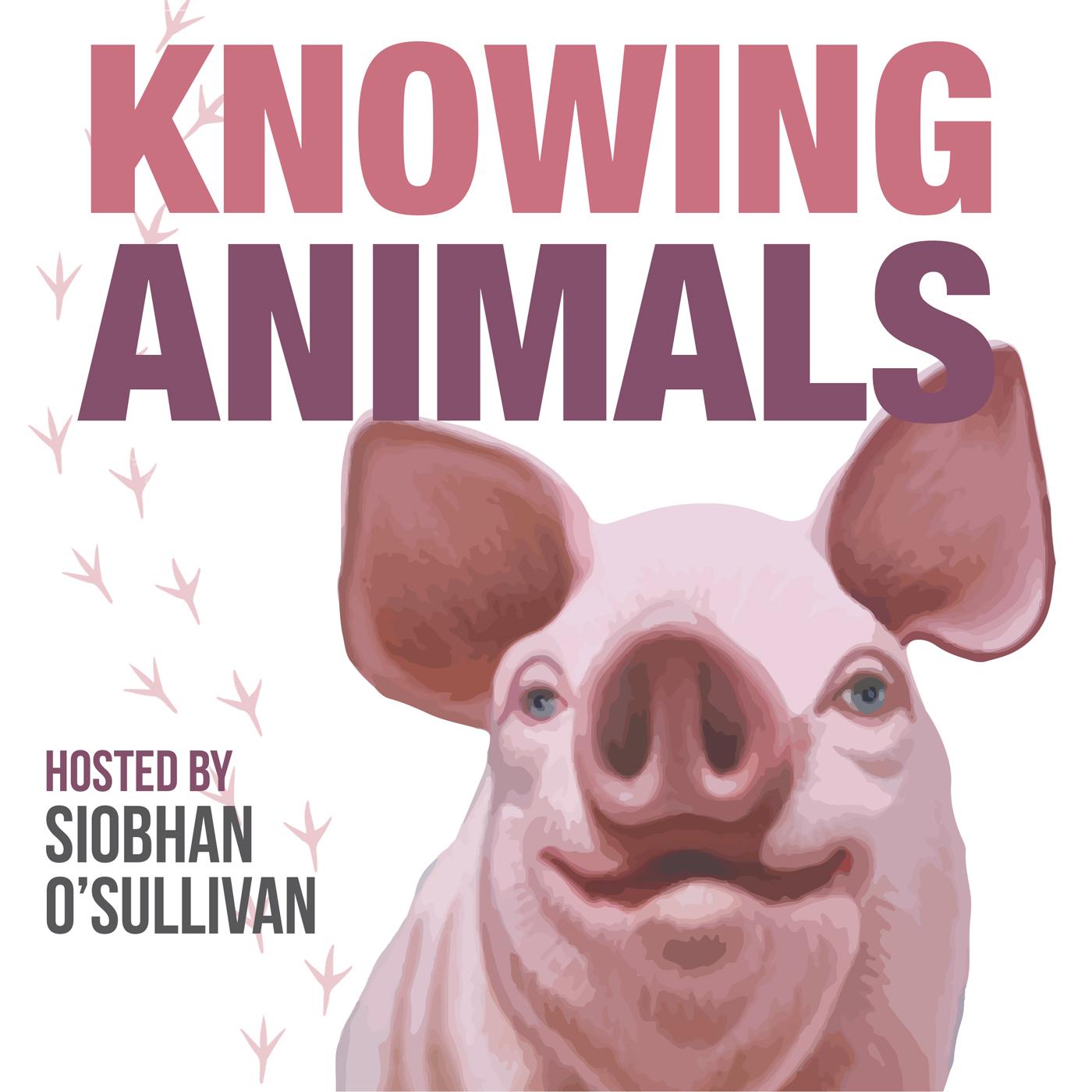 Knowing Animals show art