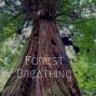 Artwork for Forest Breathing Meditation