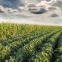 Artwork for Olho no Mercado: Riscos e perspectivas da safra americana de soja e milho