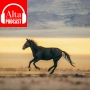 Artwork for Northern California's Wild Horses