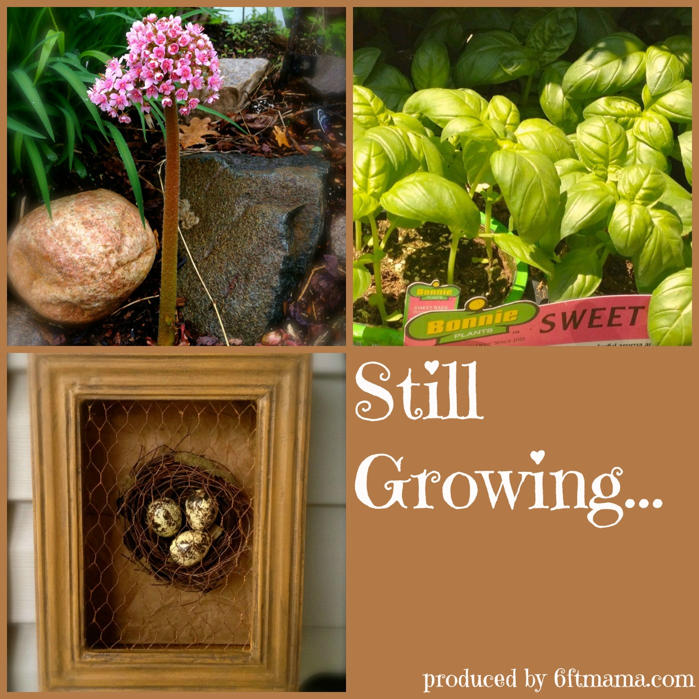 Still Growing...A Weekly Gardening Podcast show art