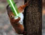Artwork for Episode 43: Jedi Master Squirrel (SQL) and the Cantina of Doom