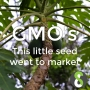 Artwork for GMO's: This little seed went to market