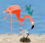Artwork for American Flamingos
