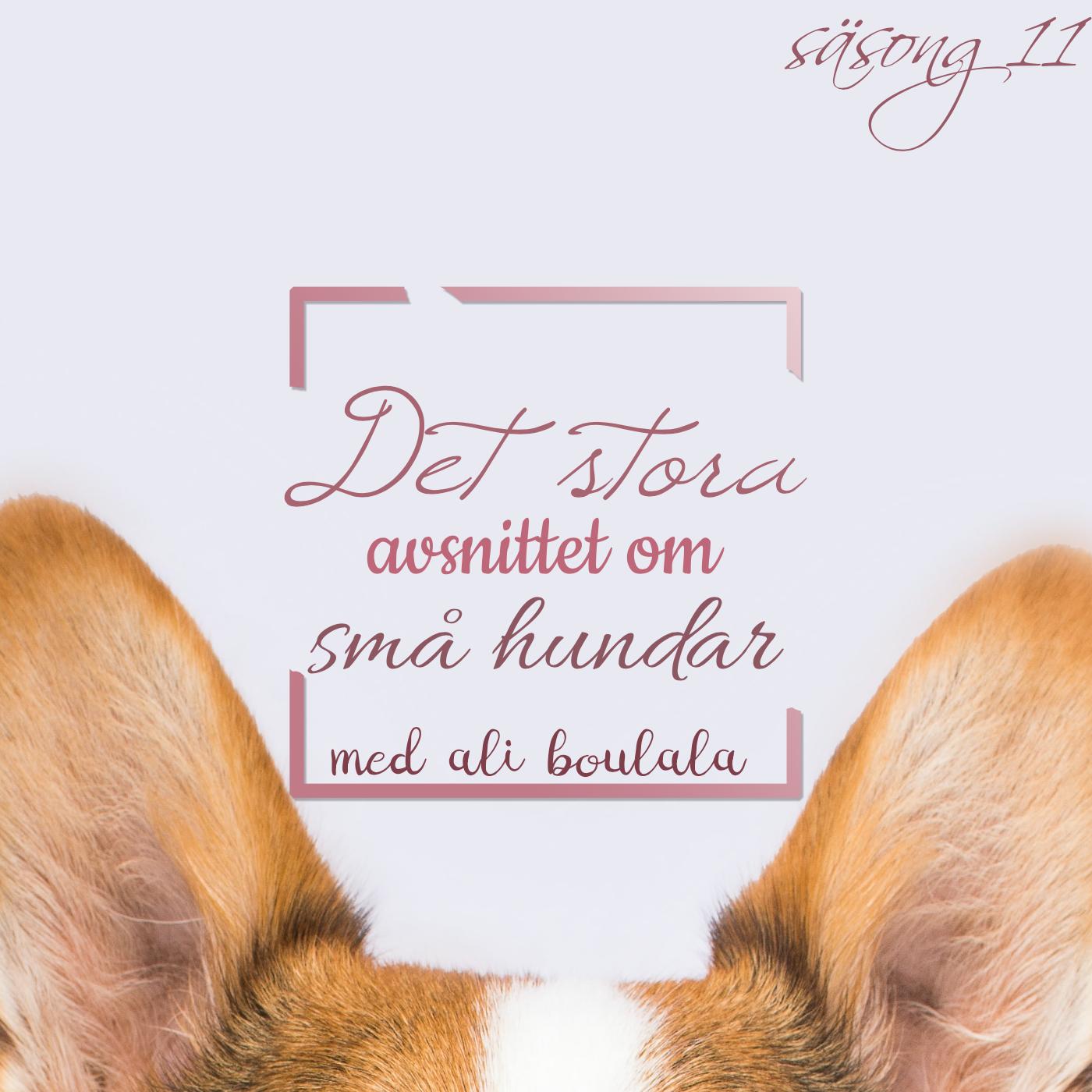 Det stora avsnittet om små hundar
