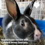 Artwork for Beyond Easter Bunnies with Ladybird Animal Sanctuary