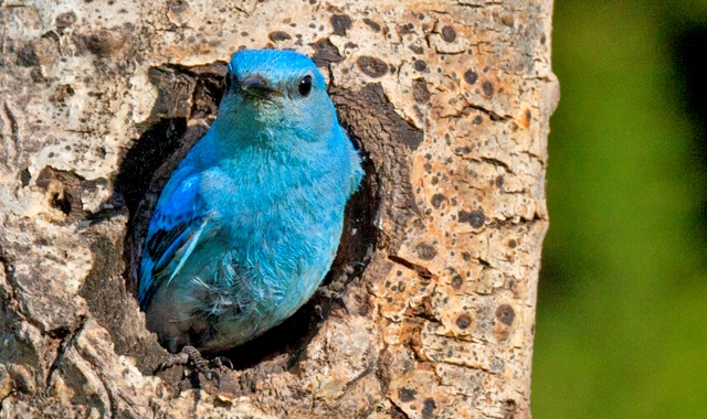 Maternal effects in songbirds and a news roundup