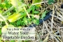 Artwork for Best Way to Water Your Vegetable Garden to Increase Harvest & Eliminate Disease