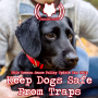 Artwork for This Common Sense Policy Update Can Help Keep Dogs Safe  From Traps (513)