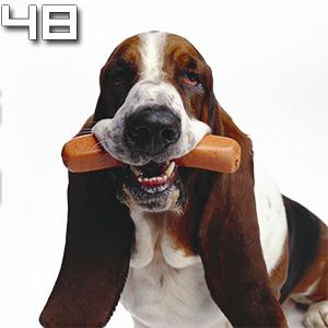 Episode 048 - This Dog Eating a Sausage
