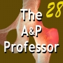 Artwork for Using Media in Our A&P Course - Advice From Barbara Waxer | TAPP Radio 28