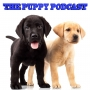 Artwork for The Puppy Podcast #8