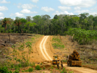 Saving or Selling the Planet? REDD, Climate Change and Indigenous Lands