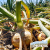 The Sweet & Savory Moments in Growing Onions & Enjoying Them in All The Foods show art