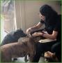Artwork for [Episode 3] Kiki Yablon; Dog Training by Kiki Yablon