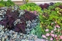 Artwork for How to Choose Plants for Your Garden This Spring - Ep. 49