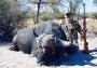 Artwork for Buffalo & Kudu in Africa's Backcountry