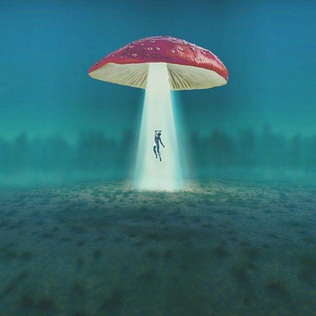 CST #345: Mushroom Trip to Delaware