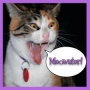 Artwork for Episode 96 - Meow Madness