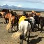 Artwork for Junior horse sport revised