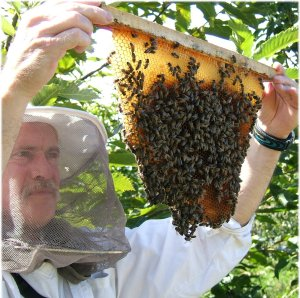 Stupid Beekeepers - a real cause of bee decline?