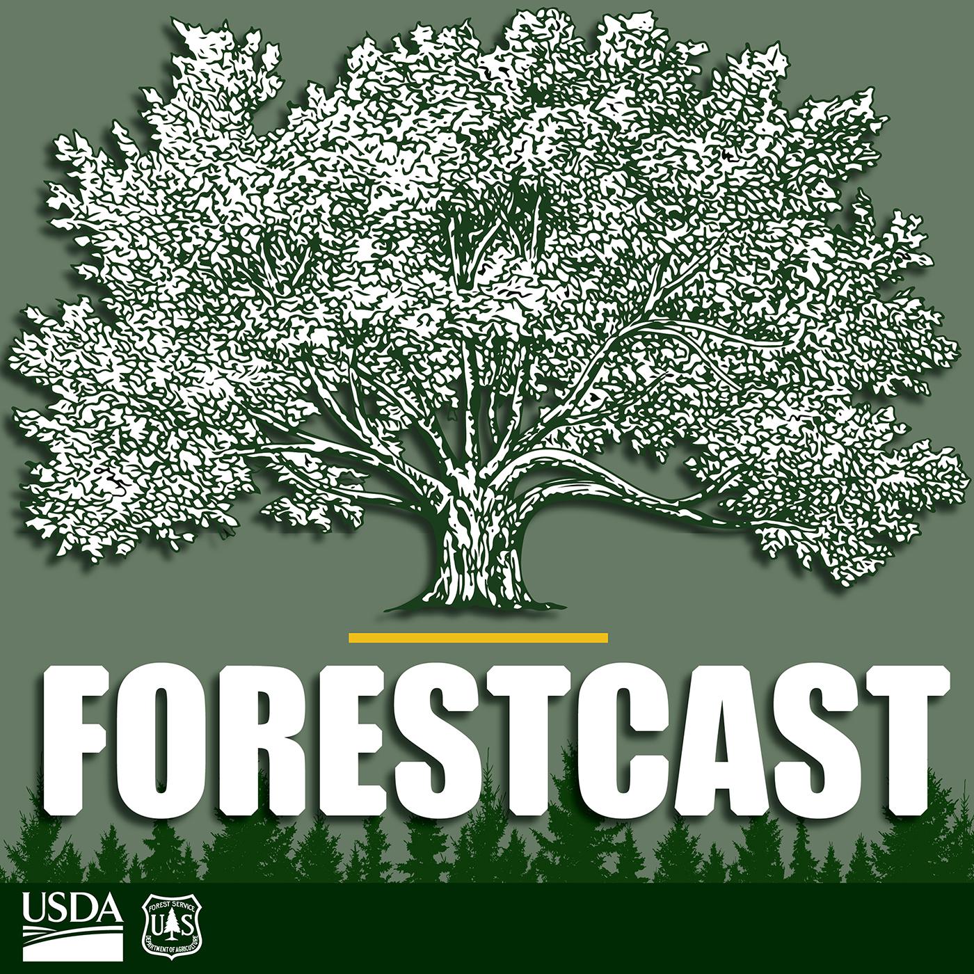 Forestcast show art