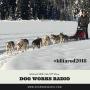 Artwork for Iditarod 2018: Kick Off Show