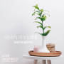 Artwork for Simplify Life S8 Ep 86