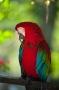 Artwork for The Parrot
