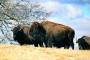 Artwork for Woolaroc Museum and Wildlife Preserve