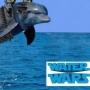 Artwork for Ryan Rowberry, Attorney, Georgia Water Wars