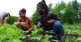 Artwork for Hoax 33 - Blacks Gonna Farm, on your dime