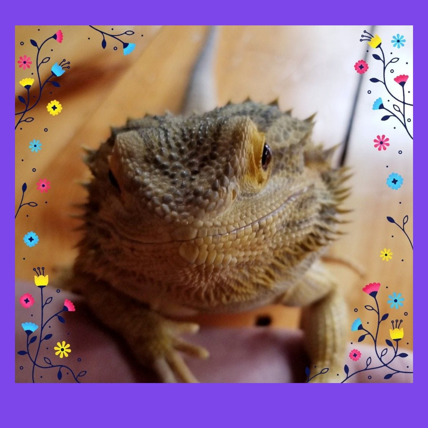 The bearded lizard
