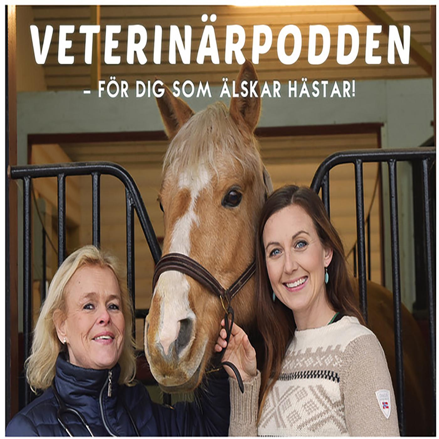 Specialavsnitt: Veterinärpodden goes EM.
