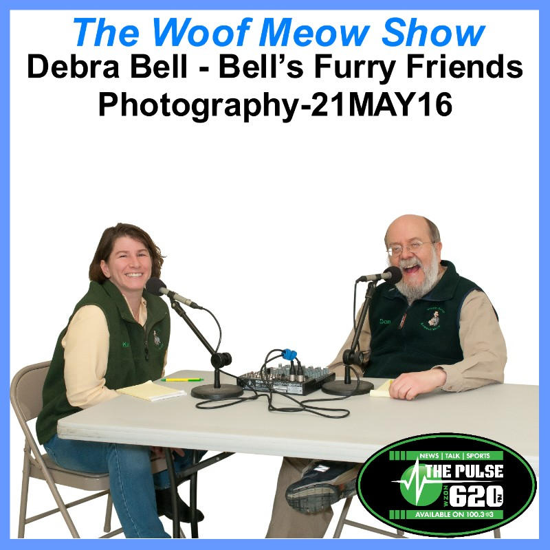 Pet Professional Profile - Debra Bell from Bell's Furry Friends Photography