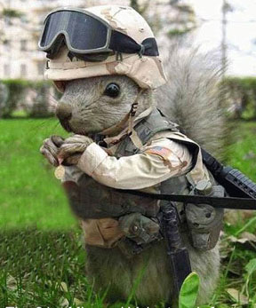 MD 44 Squirrel Wars
