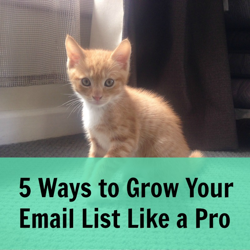 [239] 5 Ways to Grow Your Email List Like a Pro