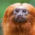 Mongabay Reports:  'Extinction denial' is the latest anti-science conspiracy theory show art