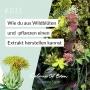 Artwork for #011 – Wie du einen Farbsud aus Wildblüten und -pflanzen herstellst