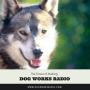 Artwork for Mushing Radio: The Future of Mushing