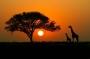 Artwork for Paleogenetics of Africa