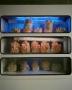 Artwork for 100 Andrew Carter growing mushrooms