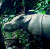 Mongabay Reports: Two new Javan rhino calves spotted in the species' last holdout show art