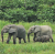Mongabay Reports: As Gabon gets paid to conserve its forests, will others follow? show art